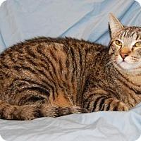 Adopt A Pet :: Freckles - Fullerton, CA