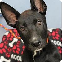 Adopt A Pet :: Prada - Red Bluff, CA