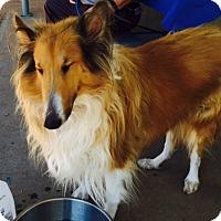 Adopt A Pet :: Pinky - Pueblo West, CO