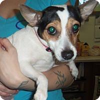 Adopt A Pet :: ZETTY - Medford, WI