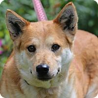 Adopt A Pet :: Lucy Ann - Glastonbury, CT