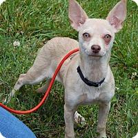 Adopt A Pet :: Riley (7 lb) Green Eyes! - SUSSEX, NJ