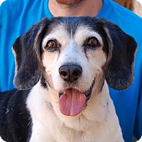 Adopt A Pet :: Maxmillian - Las Vegas, NV
