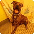 Adopt A Pet :: BOSS