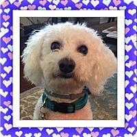 Adopt A Pet :: Toby - SC - Tulsa, OK