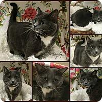 Adopt A Pet :: Mandy - Joliet, IL