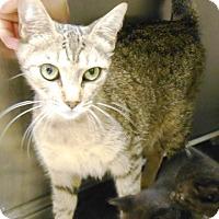 Adopt A Pet :: Jewel - Redding, CA