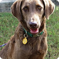 Adopt A Pet :: Malibu - Denton, TX