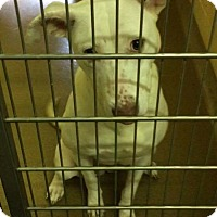 Adopt A Pet :: Paige - Lima, PA
