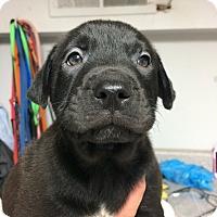 Adopt A Pet :: Ferdinand - St. Louis, MO