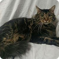 Adopt A Pet :: Kasha - Hockessin, DE