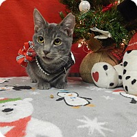 Adopt A Pet :: Dusty Sage - Holden, MO