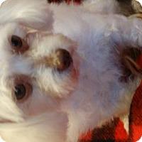 Adopt A Pet :: Sophie - Vacaville, CA