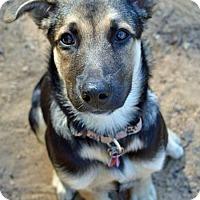 Adopt A Pet :: Cassie - Nanuet, NY