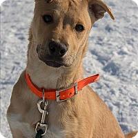 Adopt A Pet :: Chance - Duluth, MN
