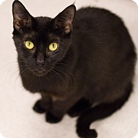 Adopt A Pet :: Squeaky - Grayslake, IL