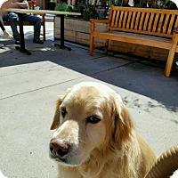 Adopt A Pet :: Archie - San Diego, CA