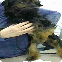 Adopt A Pet :: MACEY - Louisville, KY