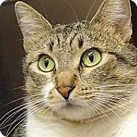 Adopt A Pet :: Lana - Foothill Ranch, CA