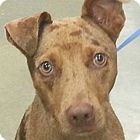 Adopt A Pet :: Rufus - Orlando, FL