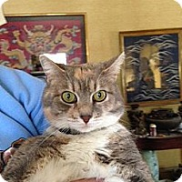 Adopt A Pet :: Tinkerbelle - Riverside, RI