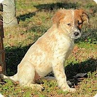 Adopt A Pet :: Lizzy - Staunton, VA