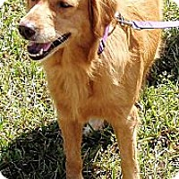Adopt A Pet :: Lilly - Murdock, FL