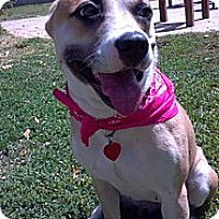 Adopt A Pet :: Princess - Phoenix, AZ