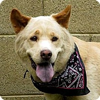 Adopt A Pet :: TAWNY - Phoenix, AZ