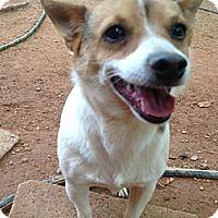Adopt A Pet :: Rod Stewart - hartford, CT