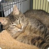 Adopt A Pet :: Levi - Shelton, WA