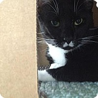 Adopt A Pet :: Tux - Winter Haven, FL