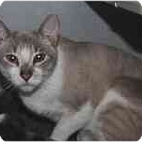 Adopt A Pet :: Myles - Marietta, GA