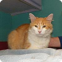 Adopt A Pet :: Finn - Dover, OH