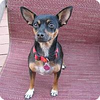 Adopt A Pet :: Madge   5 Years - C/S & Denver Metro, CO