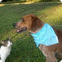 Adopt A Pet :: ** Doodle Bugg  foster needed please help - Kingston, TN