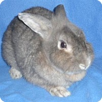 Adopt A Pet :: Matty - Woburn, MA