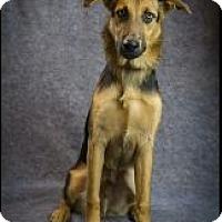 Adopt A Pet :: Whiskey - Houston, TX