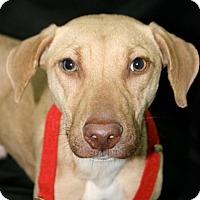 Adopt A Pet :: Charlie - Lufkin, TX
