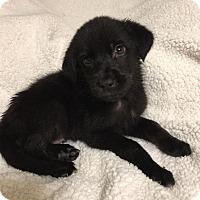 Adopt A Pet :: Comet - Ogden, UT