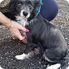 Adopt A Pet :: Grace!