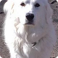 Adopt A Pet :: Winter - Beacon, NY