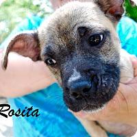 Adopt A Pet :: Rosita - Daleville, AL