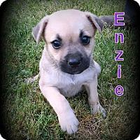 Adopt A Pet :: Enzie - Denver, NC