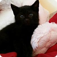 Adopt A Pet :: Patience - Monroe, NC