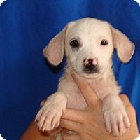 Adopt A Pet :: Jenny - Oviedo, FL