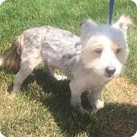 Adopt A Pet :: SAM - Rossford, OH