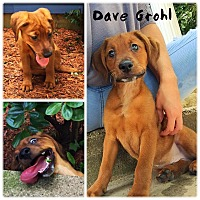Adopt A Pet :: Dave Grohl - Jersey City, NJ