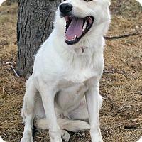 Adopt A Pet :: HERO - Westminster, CO