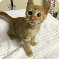 Adopt A Pet :: Crush - Cincinnati, OH